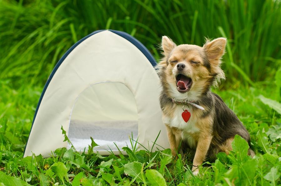 dog in a campervan