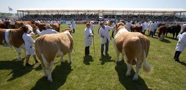 Royal Cornwall Show Cows